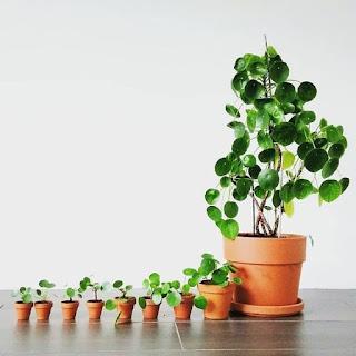 Rośliny łatwe w uprawie