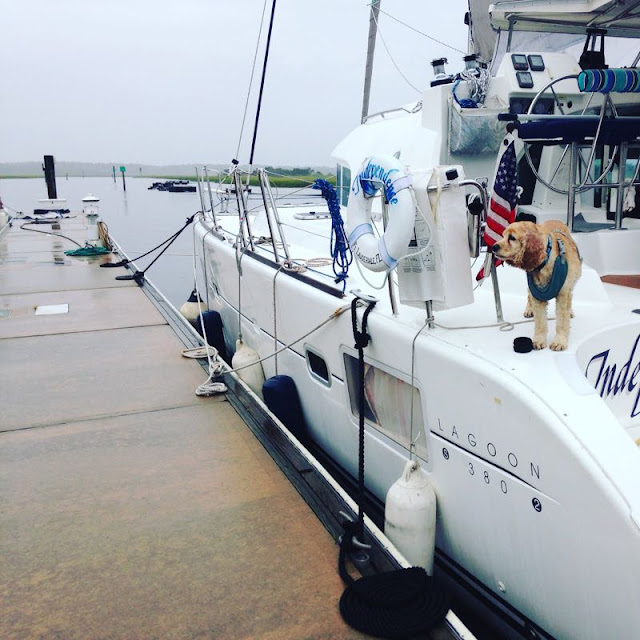 Hastings the boat dog watches the dock in the rain