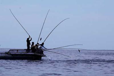 Tradisi menangkap Ikan Dengan teknik Huhate Di Larantuka