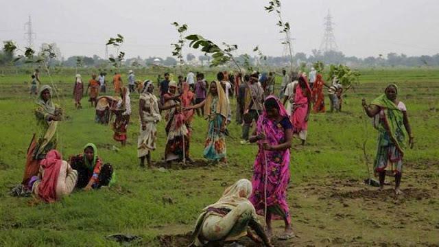 Φύτεψαν 66 εκατομμύρια δέντρα σε 12 ώρες!