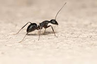 نملة ..... أرجوكم ...... لا تظلموا الحيوان