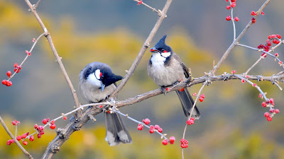 birds-images-walls-pics-so-sweet