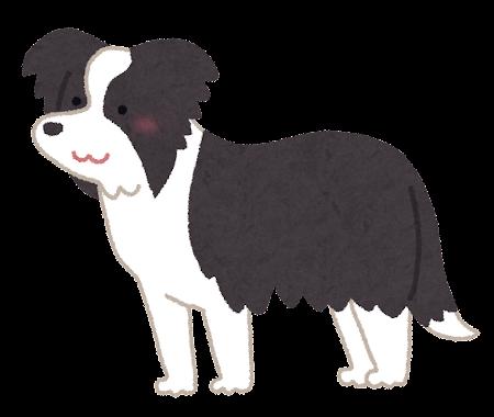 ボーダー・コリーのイラスト(犬)