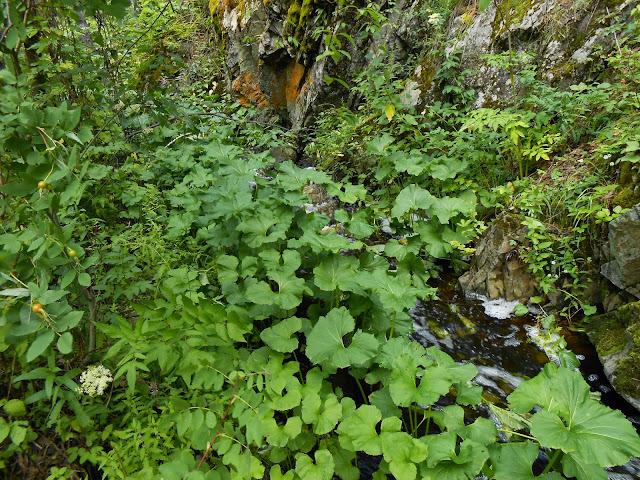 Река Межовка за водопадом