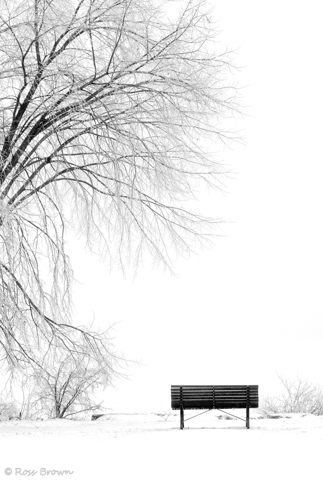 frozen trees facebook cover