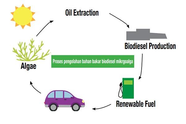 Sumber Energi Rumput Laut
