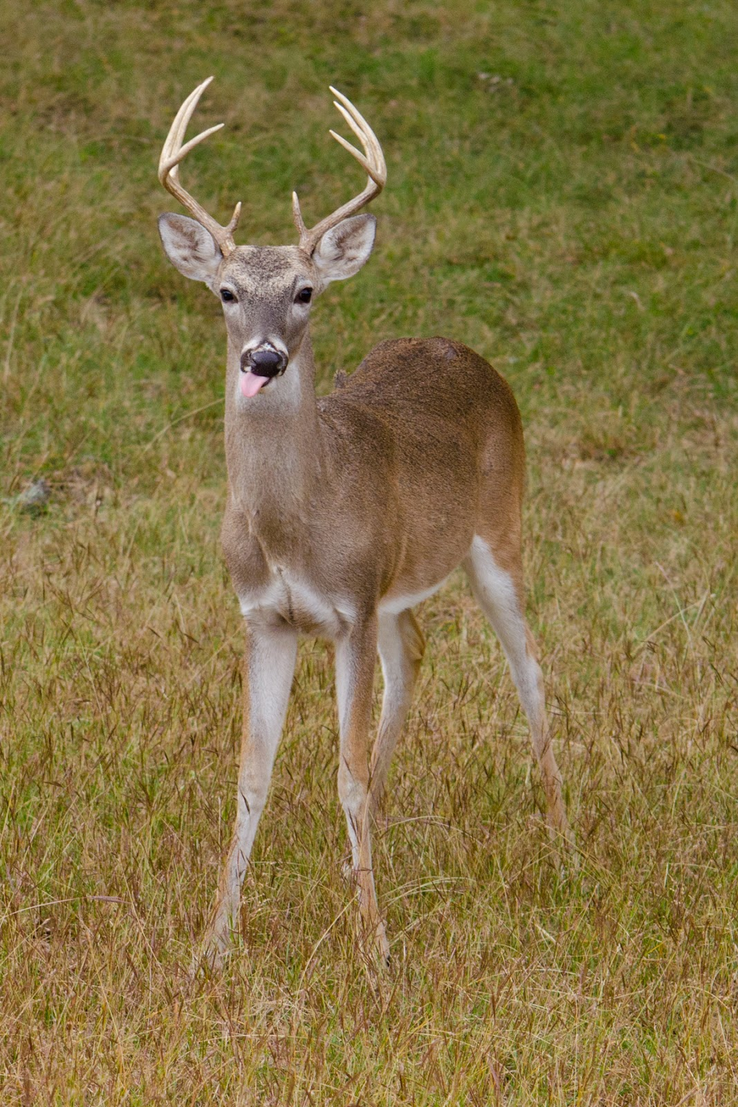 Small Buck Deer Related Keywords and Suggestions Small Buck