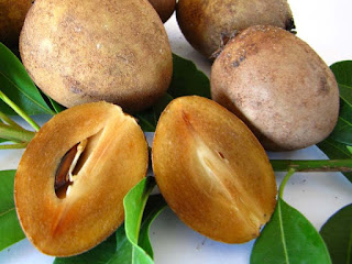 Sapodilla Fruit Pictures