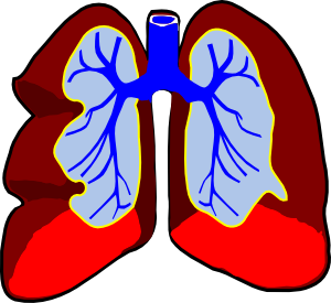 Our respiratory system is another example of the Master Engineer's intricate work.