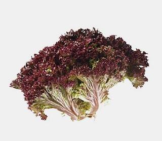 harga selada merah