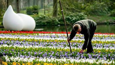 Keukenhof en Primavera. Tulipanes, bulbos y tapiz floral de Van Gogh