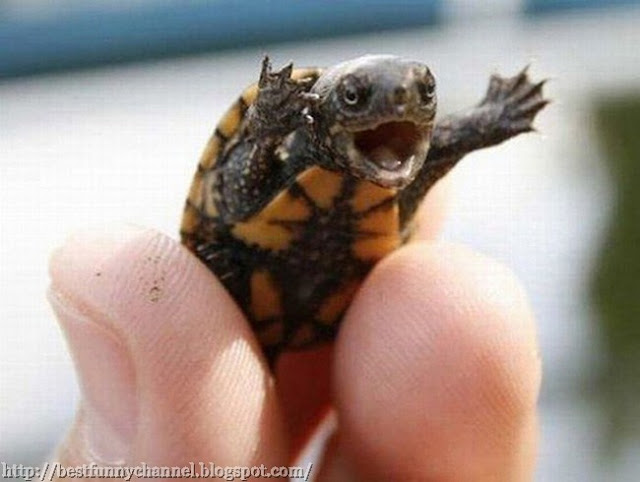 Funny turtle.