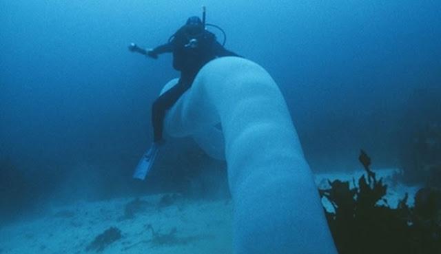 Penampakan Makhluk Aneh Mirip Cacing Raksasa Sepanjang 8 Meter Di Perairan Selandia Baru