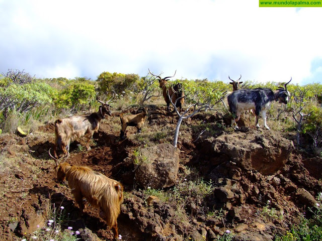 El Gobierno de Canarias convoca subvenciones para proyectos de desarrollo rural por 6,6 millones de euros