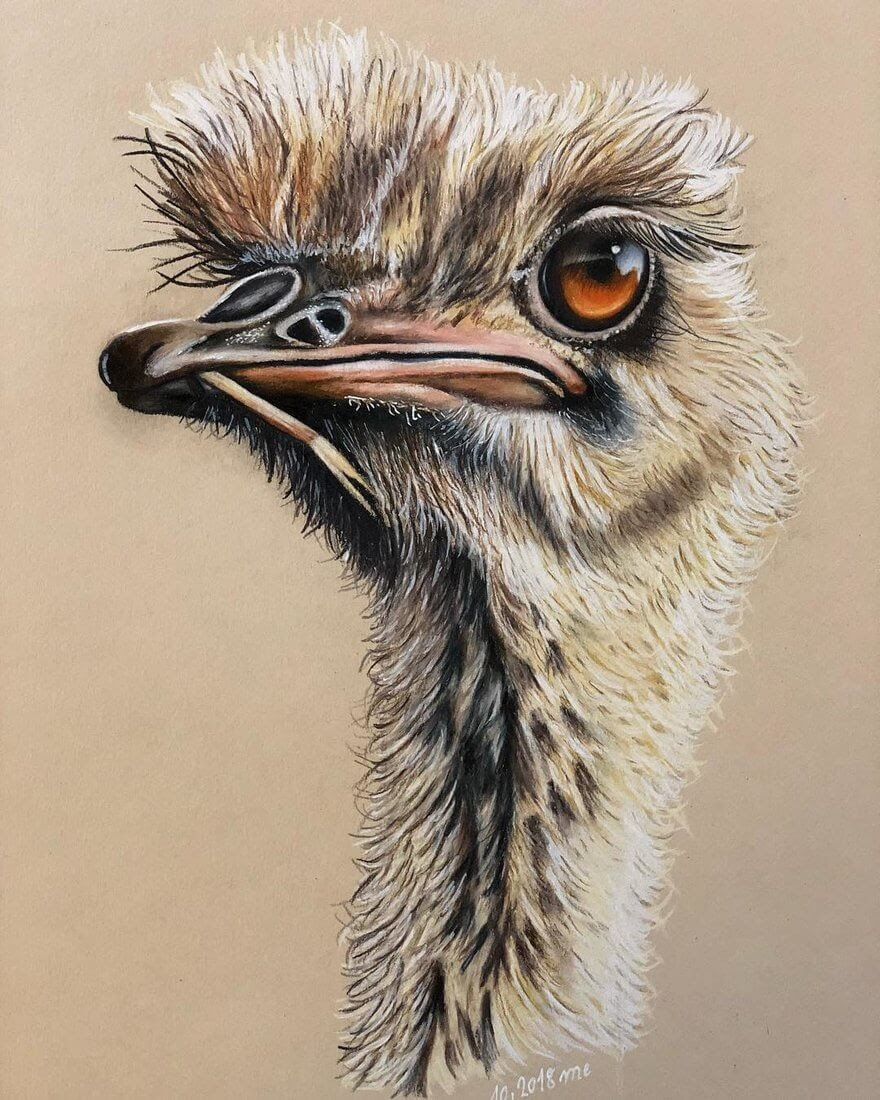 04-Ostrich-Eichenberger-Rodriguez-Colored-Wildlife-Drawings-www-designstack-co