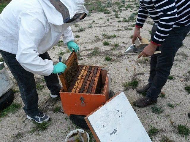 Μελισσοκόμοι και τυροκόμοι εν δράση στη ΣΕΚ Επιδαύρου