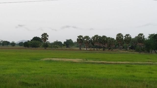 Millones de murciélagos en su vuelo hacia el Tonle Sap