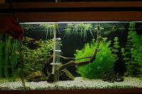 podmiana wody w akwarium