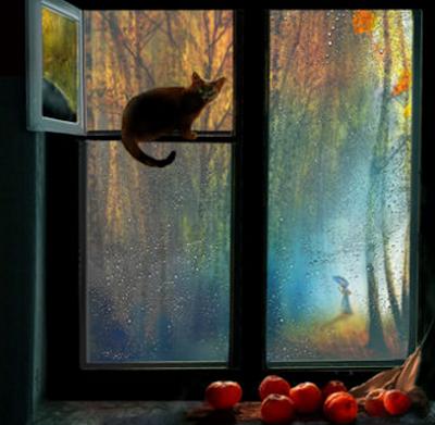 Осеннее окно дождь