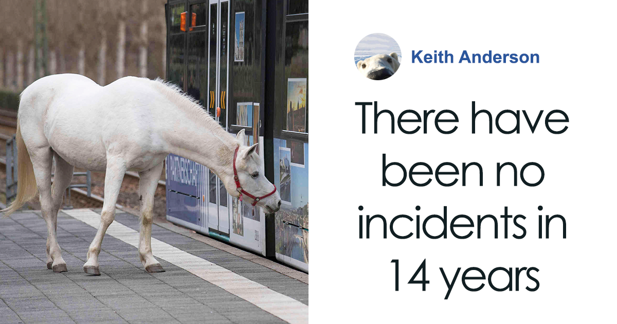 Horse Goes On A Daily Walk Alone For 14 Years, And People Offer Pets And Treats To Her