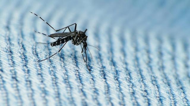 Municípios do País promovem 'Dia D' de combate ao Aedes nesta sexta (30)