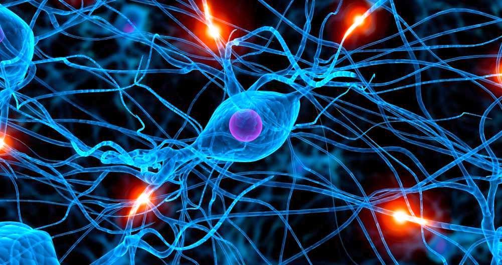 El sistema nervioso en biologia