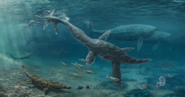 Fossil teeth show how Jurassic reptiles adapted to changing seas