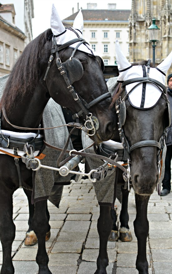Horses in Vienna Austria