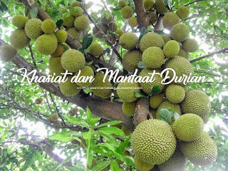 19 Khasiat dan Manfaat Buah Durian