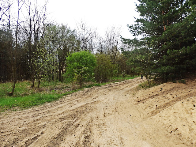 Zasypana piaskownia koło Częstochowy (Pustynia Siedlecka)