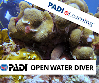 http://www.thedivebus.com/learn/start-diving/padi-open-water-diver-course/