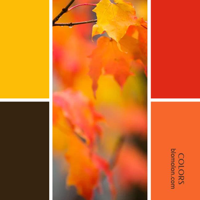 variedad_en_color_combinacion_35