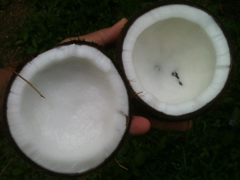 Coconut Halves Pixibay Image