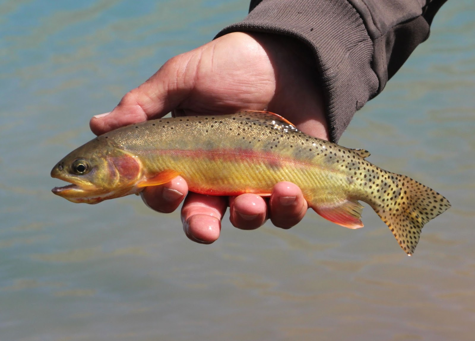 Central Alberta Fly Tying Club: Fly Fishing for Golden ...