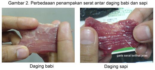 Membedakan daging sapi dengan daging babi hutan / Celeng1
