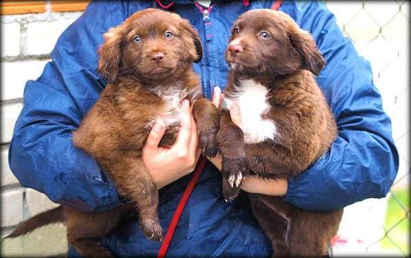 cachorras talla pequeña mediana