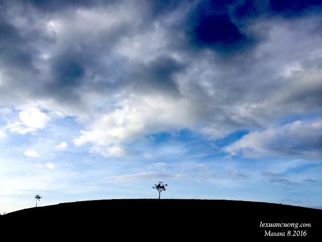 Ở đây cũng có những cây cô đơn, 1 mình 1 cõi