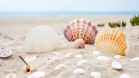 Shells, Sand, Beach, Ocean, Summer