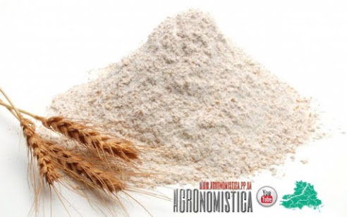 Wheat Flour of the highest quality produced in Ukraine