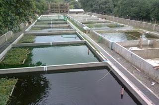 Jenis-Jenis Kolam Budidaya Ikan yang Sering Digunakan
