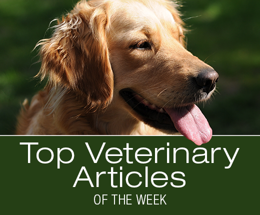 Top Veterinary Articles of the Week: Inducing Vomiting, Placebo Effect, and more ...