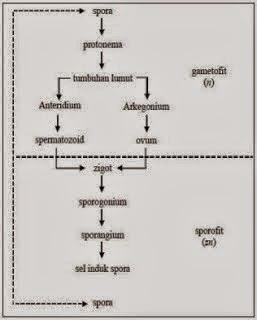 http://www.cpuik.com/2013/07/ciri-ciri-kelompok-tumbuhan-thallophyta.html