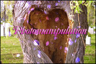 photo manipulation artist, heart shaped tree, pink petals, park