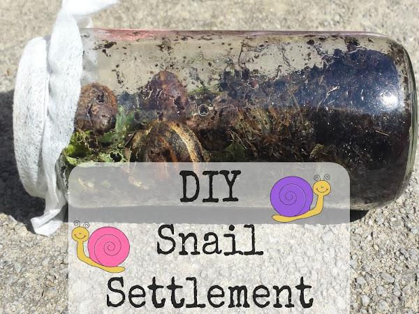 DIY Snail Settlement