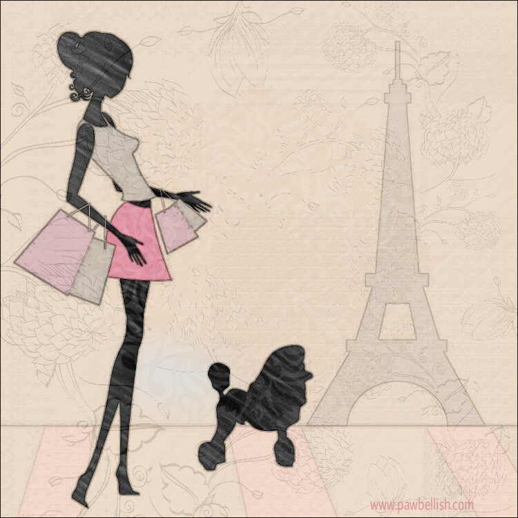 Lady shopping for her Poodle puppy