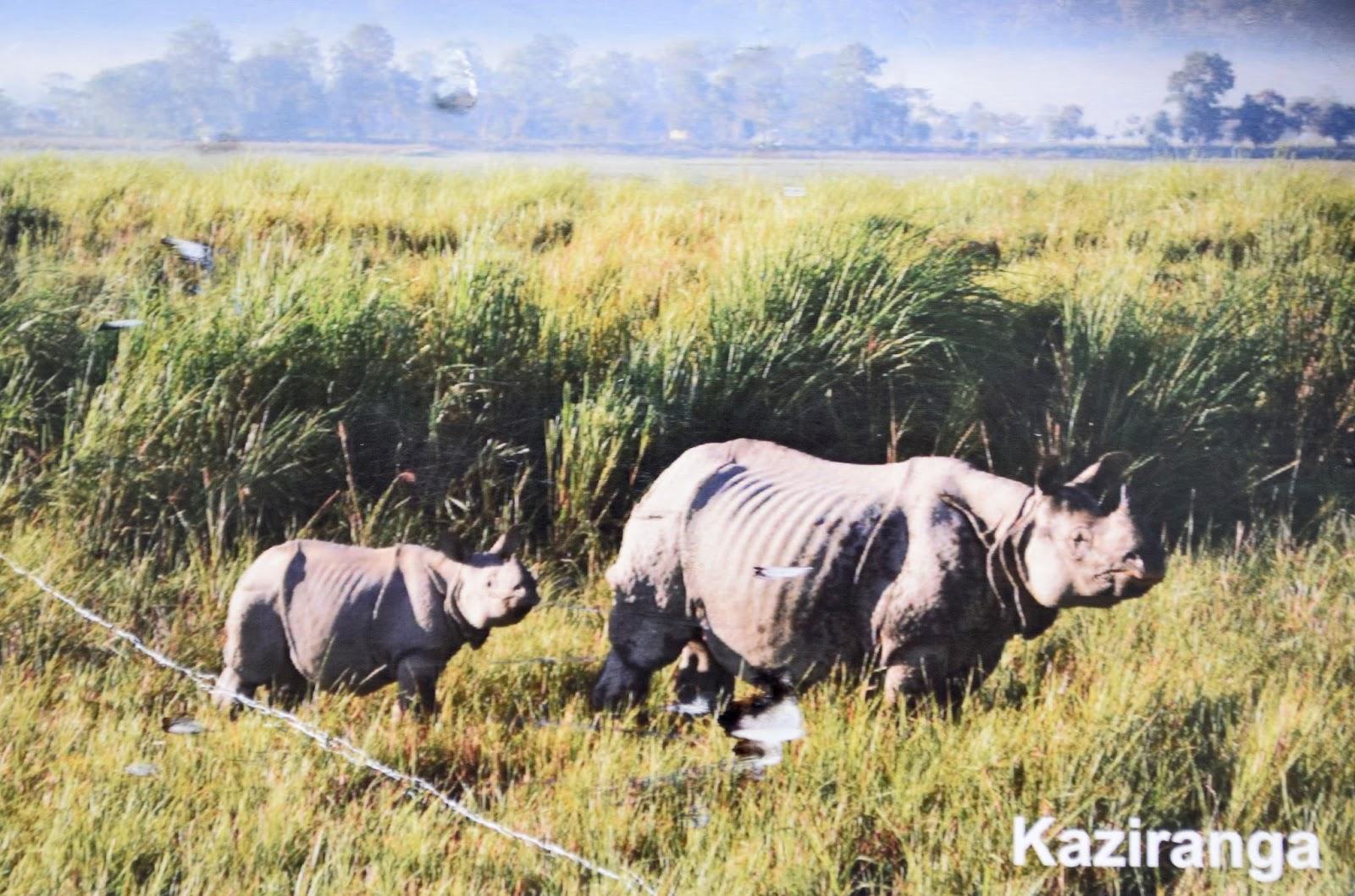 Park Narodowy Kaziranga