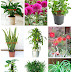 Air Purifying Plants To Remove Harmful Toxins