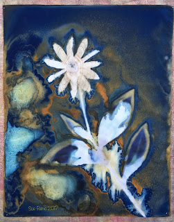 Wet Cyanotype_Sue Reno_Image 62
