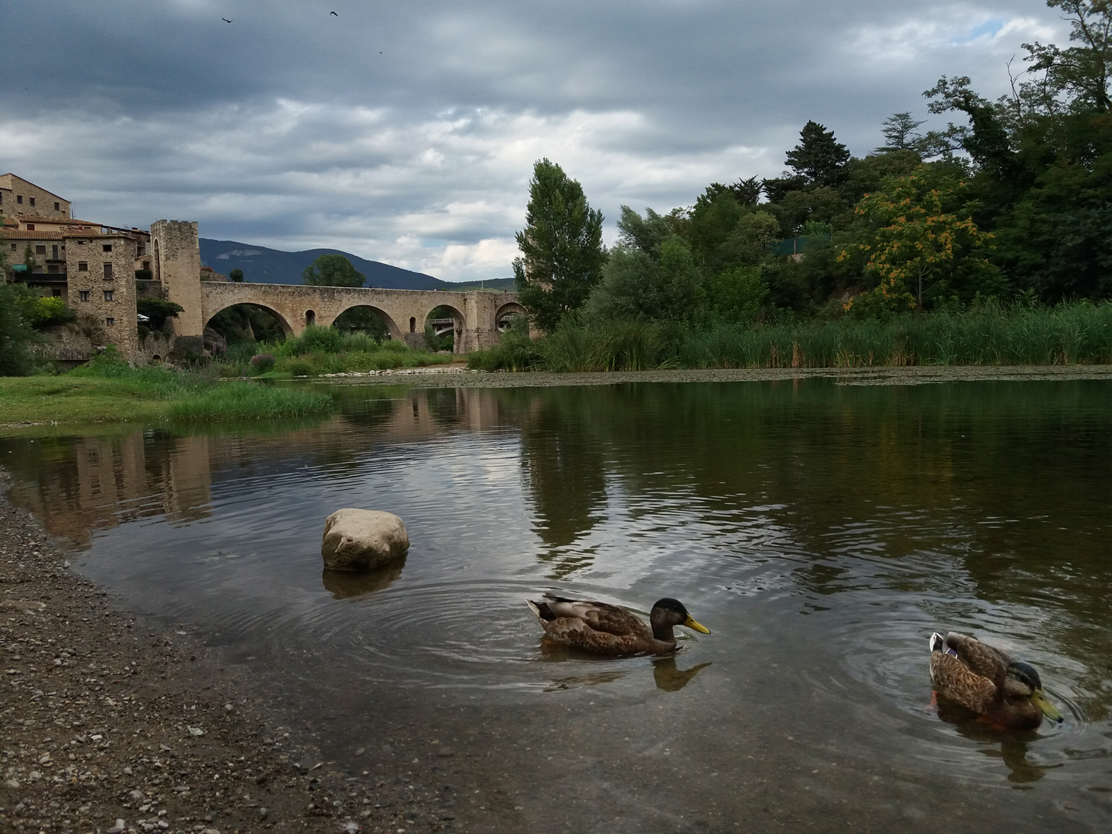 Besalu bridge with river and ducks