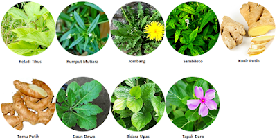 herbal carnocap - www.infojagakesehatan.blogspot.co.id - isman